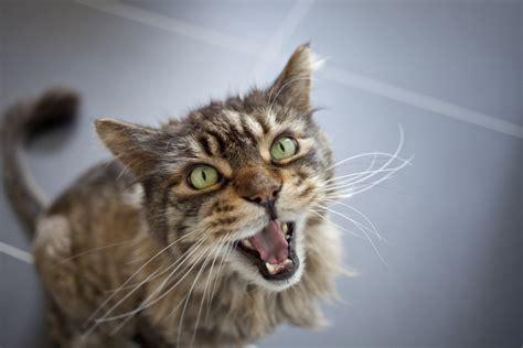 feline bladder disorders picture 7