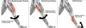 does hgh cause muscle cramps picture 10