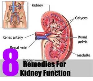 herbal remedies kidney failure picture 3