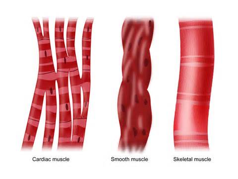 which type of lipo 6 can make muscles picture 14