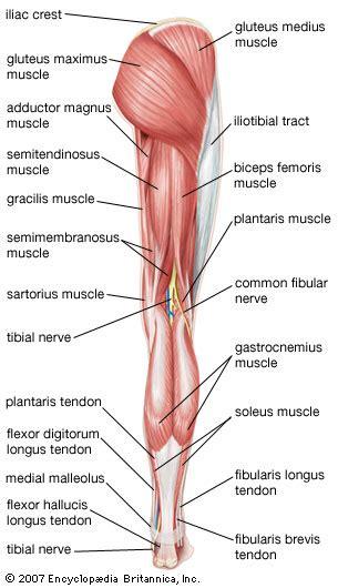penis sprain picture 6