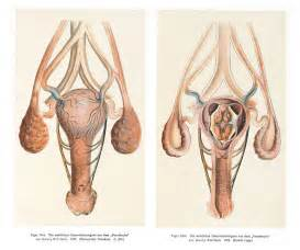 penis kuda masuk vagina virgin picture 9