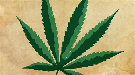 what will happen if my is around marijuana picture 10