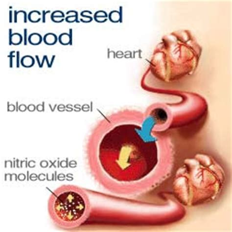herbs that increase blood flow of genitals of picture 8