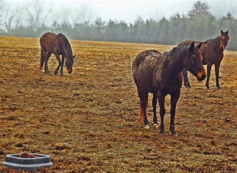 aging horses picture 3