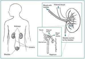 high-pressure bladder and renal failure picture 10