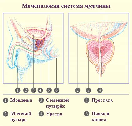 prostate health and chaste life picture 2