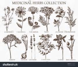 english herbal plant picture 11