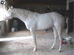 horses skin and coat condition picture 3