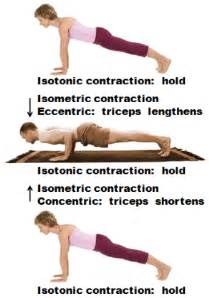 isometric and isotonic muscle contraction picture 15