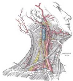 body position for thyroidectomy picture 6