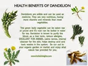 health benefits of burdock root tea picture 7