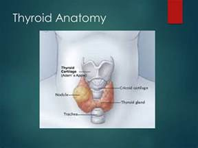 anatomy thyroid picture 9