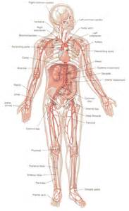 Blood vessel circulation picture 3