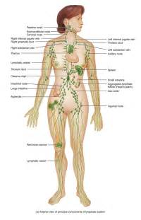 body cleanse systems picture 2