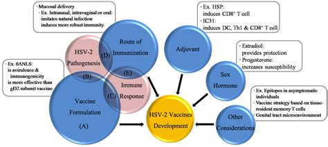 herpes simplex vaccine picture 3