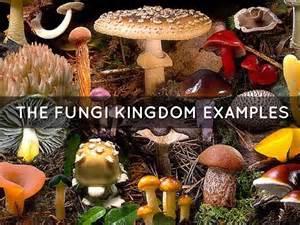 fungi kingdom picture 13