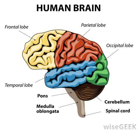 cognitive le cerbvas disease picture 11