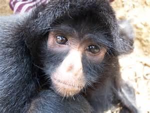 skin color in chimpanzees picture 9