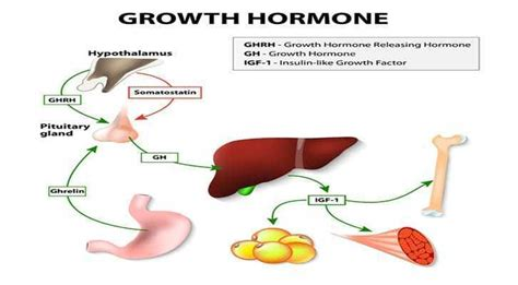 human growth hormone jaw picture 11