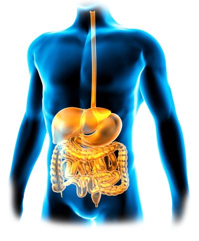 what is a probiotic picture 9