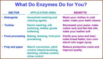which enzymes are good for digestion picture 12