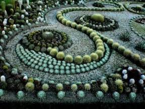 cactus picture 11