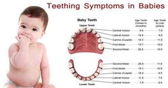 can a 2 month old infant teeth picture 4