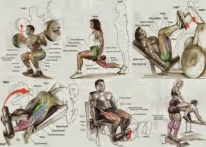 muscle building exercises for legs picture 6