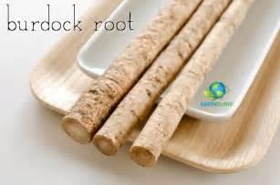 burdock root health benefits picture 9
