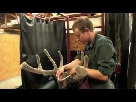 does deer antler velvet make your penis grow picture 3