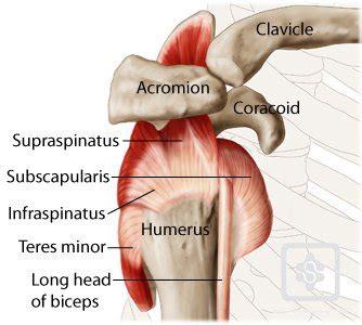 shoulder blade psin during detox picture 5