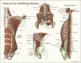 lower body muscle diagram picture 6