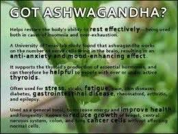 ashwanganda for thyroid picture 9