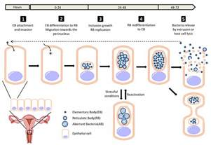 stages of the bacterial infection picture 3