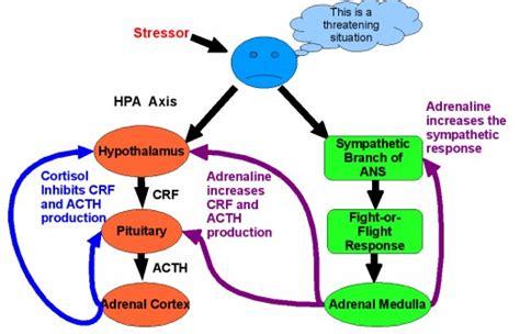 autoimmune thyroid gastrointestinal hypertension picture 11