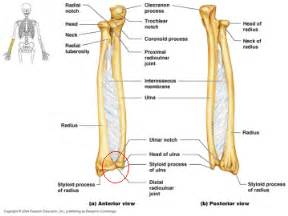 distal radial ulnar joint picture 3