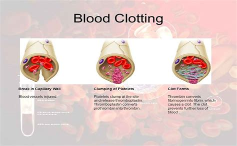 can stameta blood cleanser cause abortion picture 10