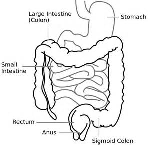 human cyellow diarrhea causes intestinal system picture 11
