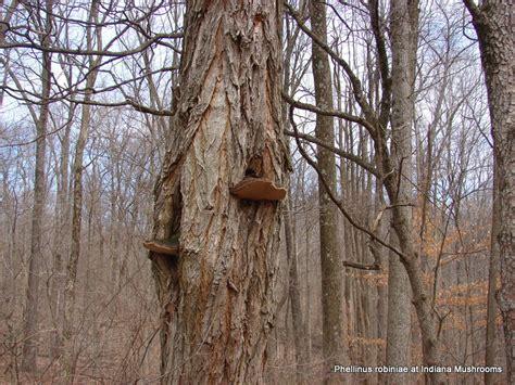 wood fungi picture 7