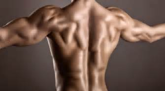back muscle picture 2