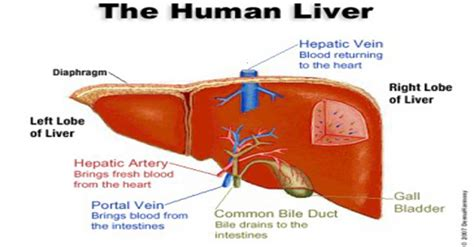 melasma liver cleanse picture 1