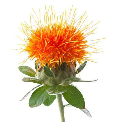 safflower and hair picture 11