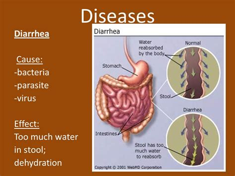 diarrhea and impact on liver picture 13