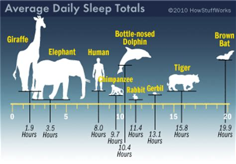what is the sleeping pattern for a cheetah picture 1