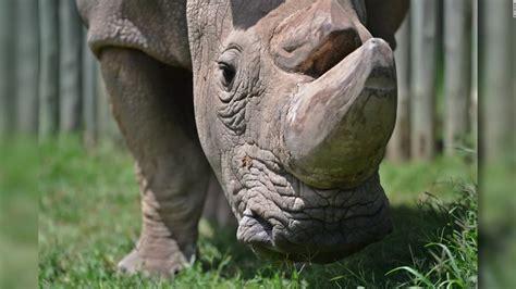 where can i buy rhino rush picture 12