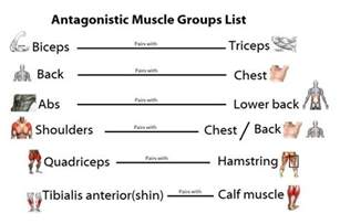 muscle list picture 9