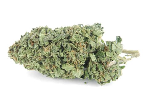 is diesel organic herbal salvia? picture 14