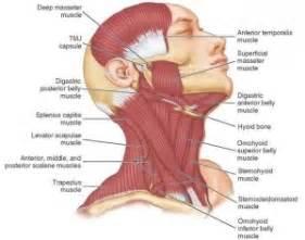 headache clenching teeth picture 7