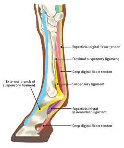 equine pain relief therapy picture 2